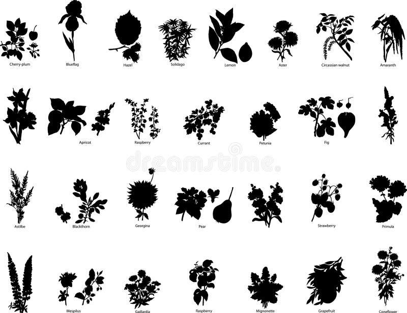 Siluetas de las bayas y de las flores ilustración del vector