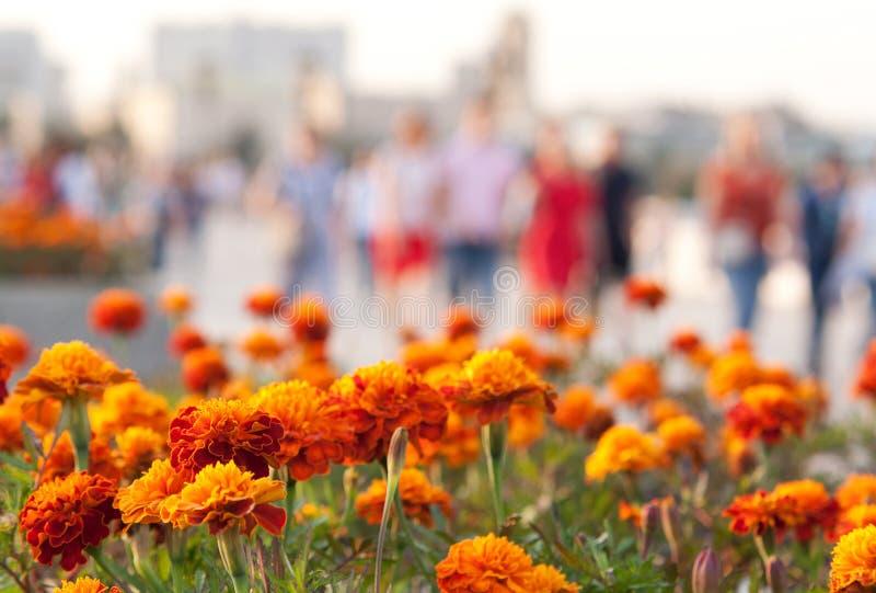 Siluetas de las maravillas y de la gente de las flores en un parque de la ciudad fotografía de archivo libre de regalías
