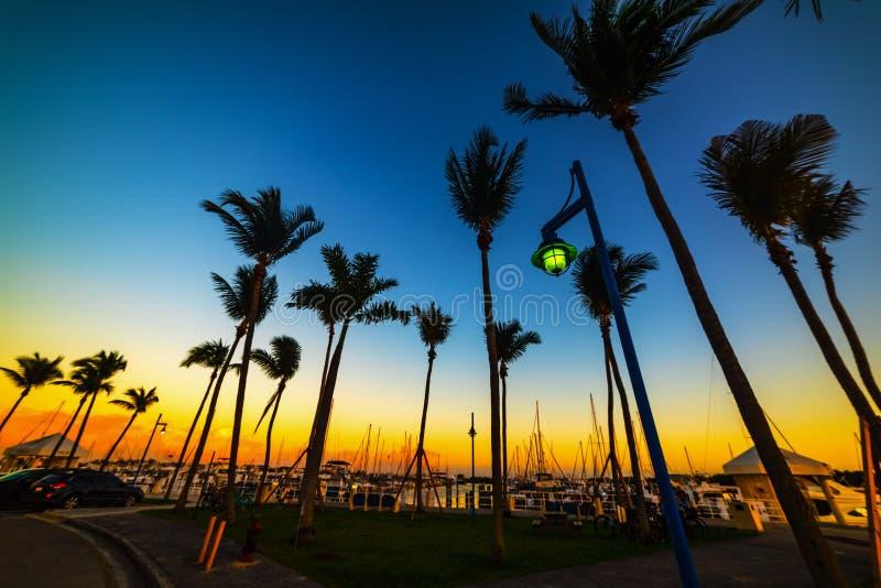 Siluetas de las palmeras en puerto deportivo de la arboleda del coco en la puesta del sol fotografía de archivo libre de regalías