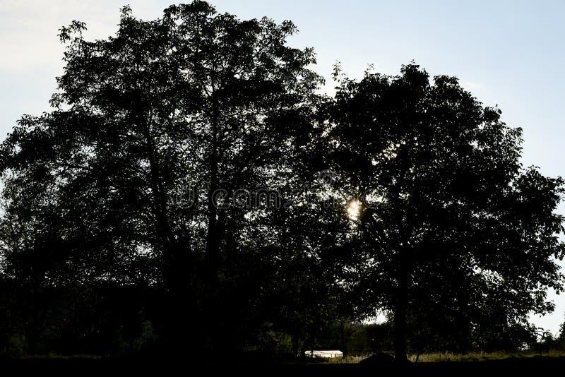 Siluetas de los árboles de castaña viejos en la puesta del sol fotos de archivo libres de regalías