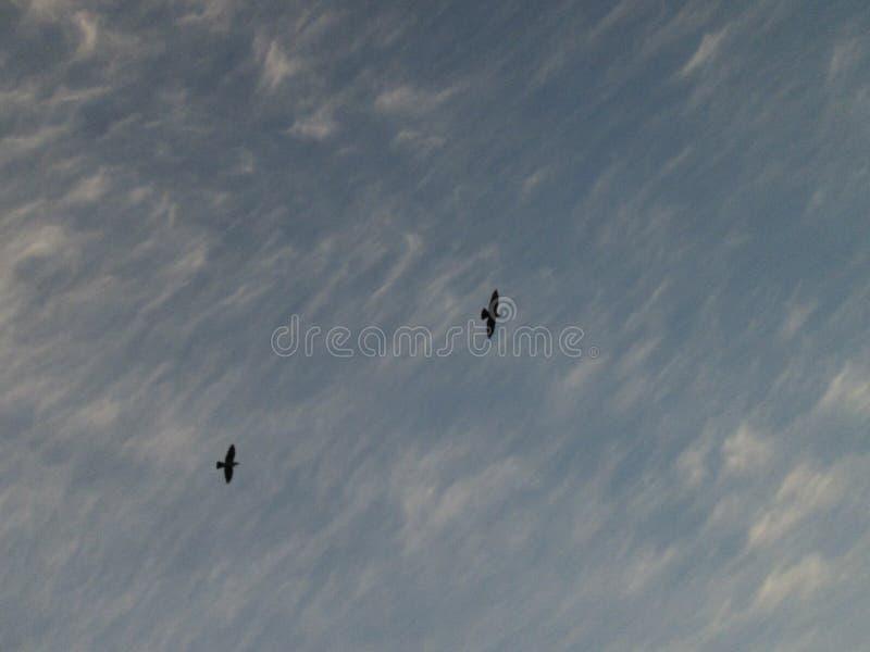 Siluetas de pájaros en el cielo imágenes de archivo libres de regalías