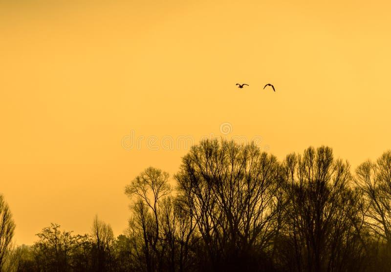 Siluetas de pájaros en la salida del sol en invierno sobre los árboles de hojas caducas en la orilla de un lago fotografía de archivo