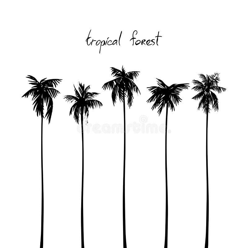 Siluetas de palmas tropicales Imagen del vector en blanco foto de archivo