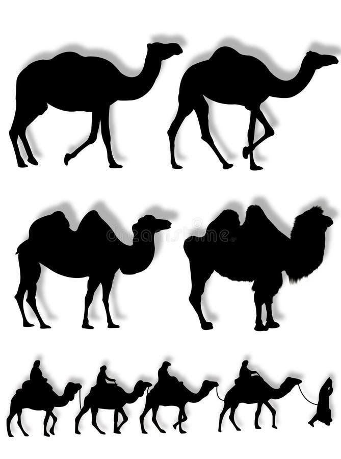 Siluetas del camello y del dromedario ilustración del vector