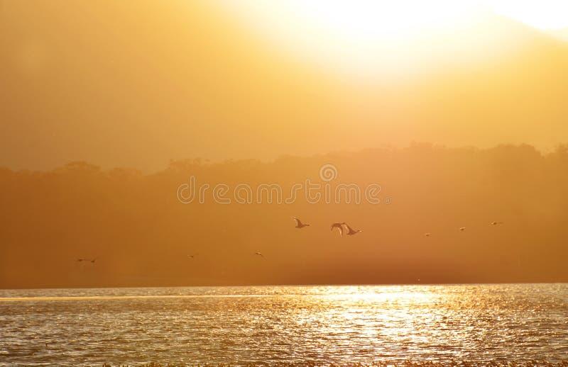 Siluetas del fondo de los patos que vuelan en el lago de oro de la puesta del sol imagen de archivo