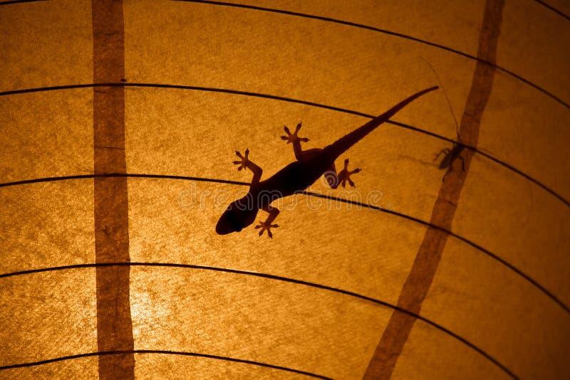 Siluetas del Gecko y del insecto en una cortina de lámpara foto de archivo libre de regalías
