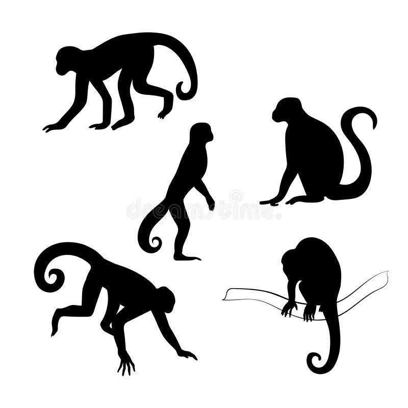 Siluetas del vector del mono del capuchón stock de ilustración