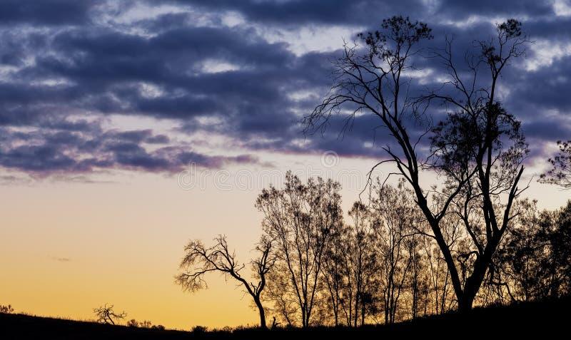 Siluetas desnudas de los árboles en la puesta del sol imagenes de archivo