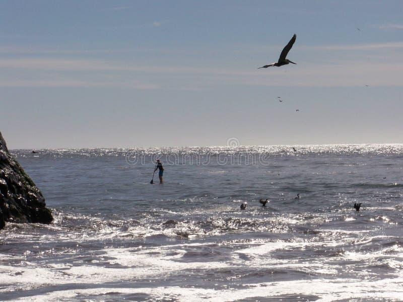Siluetas en la playa foto de archivo libre de regalías