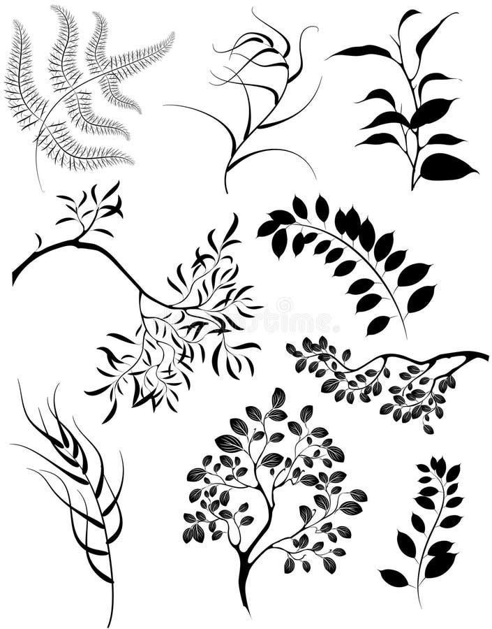 Siluetas estilizadas de ramificaciones y del pl decorativo ilustración del vector