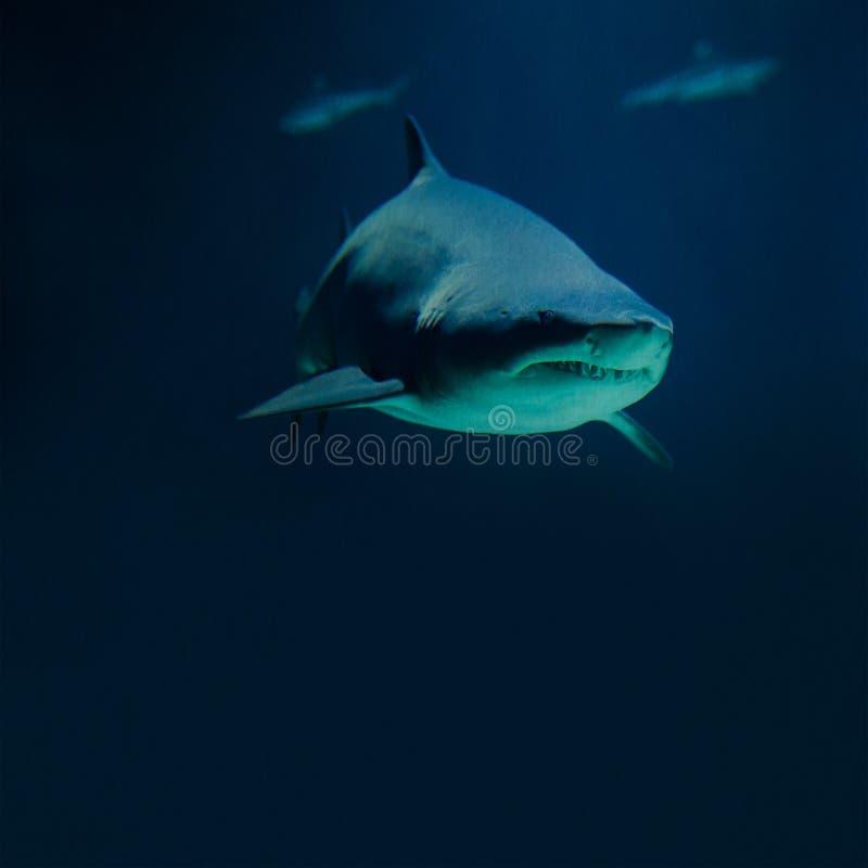 Siluetas grandes del tiburón y de los pescados de la fotografía profundamente fotografía de archivo libre de regalías