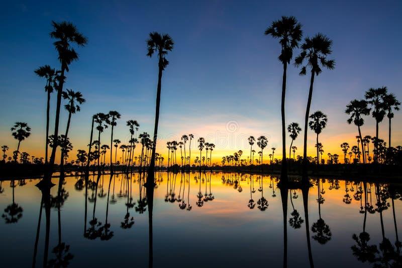 Siluetas palmera, paisaje Tailandia fotografía de archivo libre de regalías