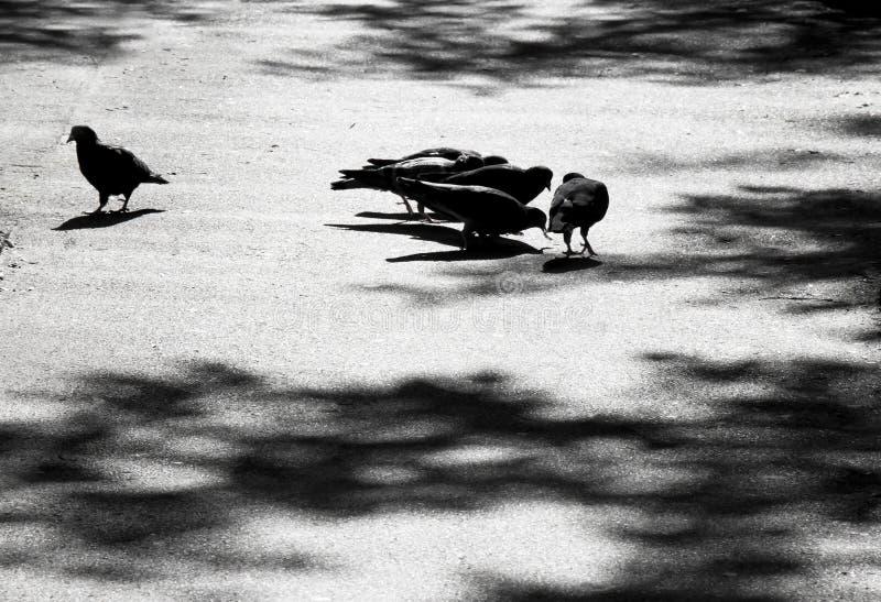 Siluetas y sombras borrosas de las palomas en la calle de la ciudad imagenes de archivo