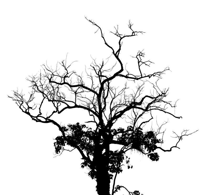 Siluetee el árbol stock de ilustración
