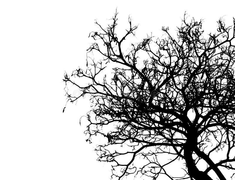 Siluetee el árbol muerto aislado en el fondo blanco para asustadizo o la muerte con la trayectoria de recortes foto de archivo