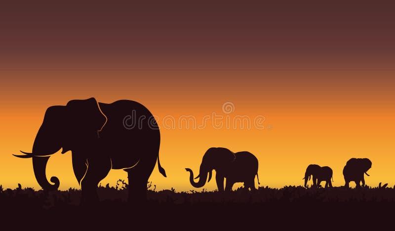 Siluetee el ejemplo del paisaje de un grupo de elefantes Puesta del sol hermosa, fondo de la naturaleza ilustración del vector
