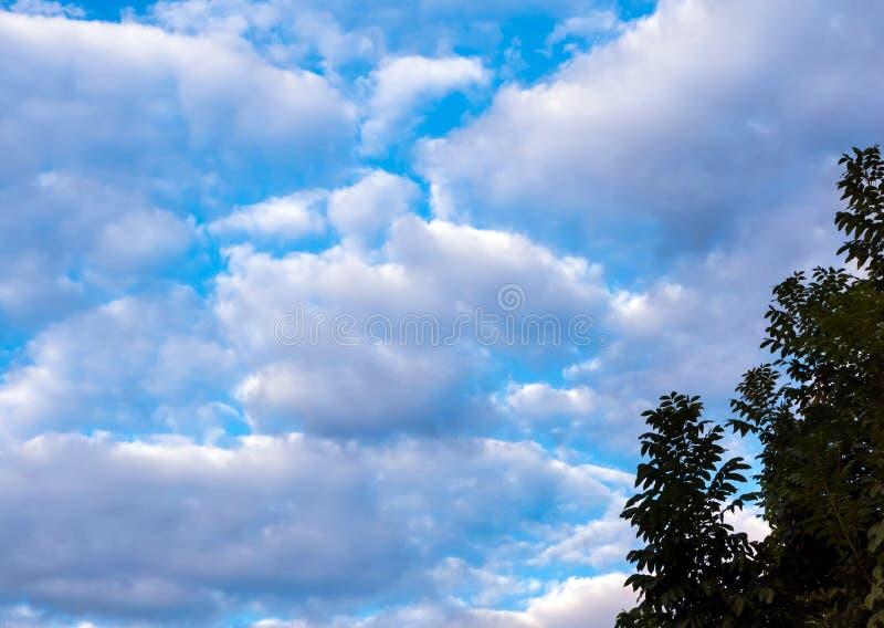 Siluetee el manojo de árboles y los colores vivos del cielo de la tarde fotografía de archivo