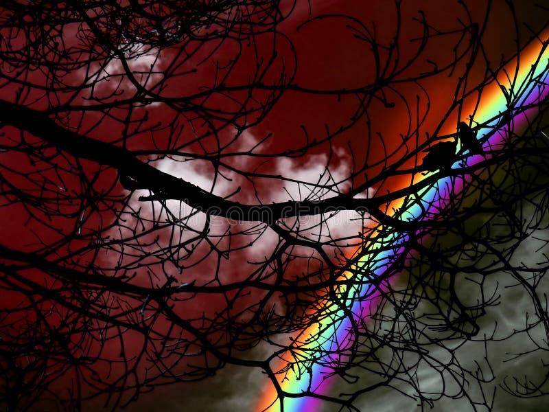 siluetee el pájaro gemelo en árbol y puesta del sol roja del cielo foto de archivo libre de regalías