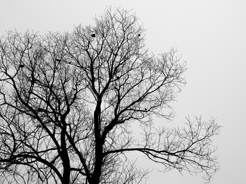 Siluetee la rama del árbol calvo en la niebla blanca en invierno fotografía de archivo libre de regalías