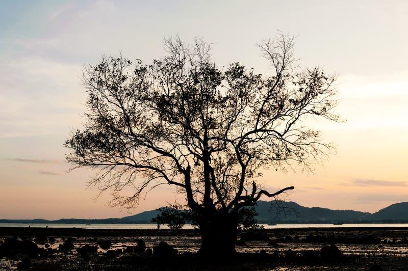 Siluetee la rama del árbol con el color de la puesta del sol fotos de archivo