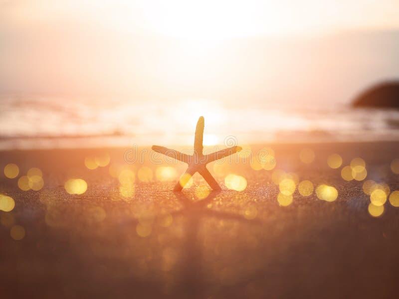 Siluetee las estrellas de mar en la arena en la playa de la puesta del sol imagen de archivo