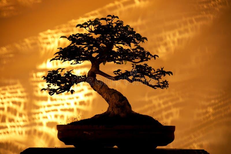 Siluetee los árboles de los bonsais en el pote y el fondo amarillo de la tela fotos de archivo libres de regalías