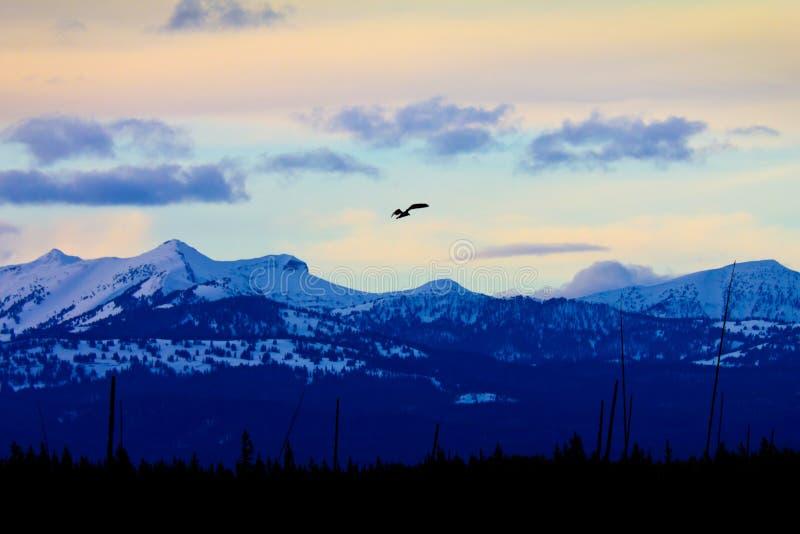 Siluetta in ascesa dell'aquila calva al tramonto fotografia stock