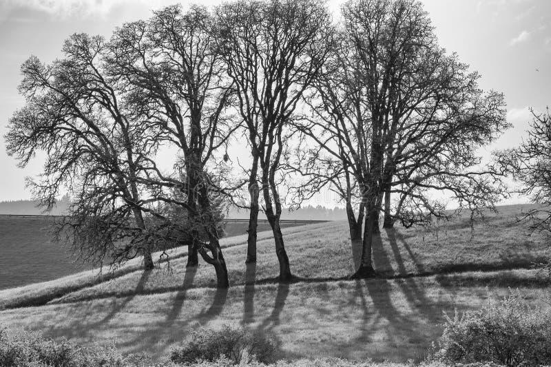 Siluetta in bianco e nero dell'albero fotografia stock