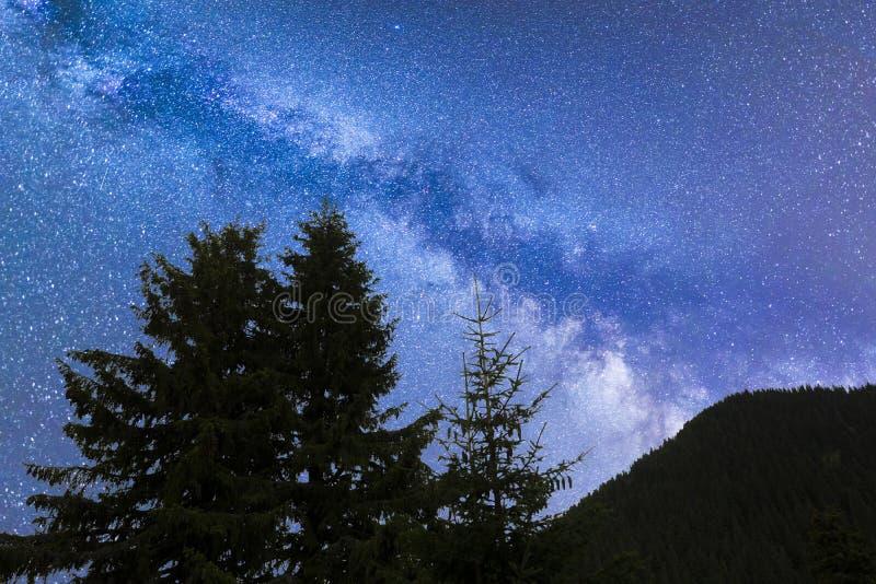 Siluetta blu dei pini delle stelle cadenti della Via Lattea fotografia stock libera da diritti