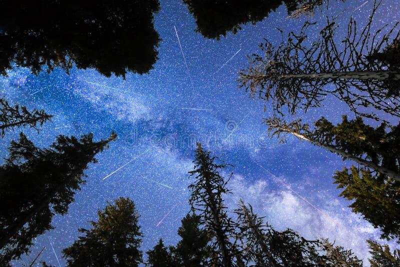Siluetta blu dei pini delle stelle cadenti della Via Lattea immagine stock