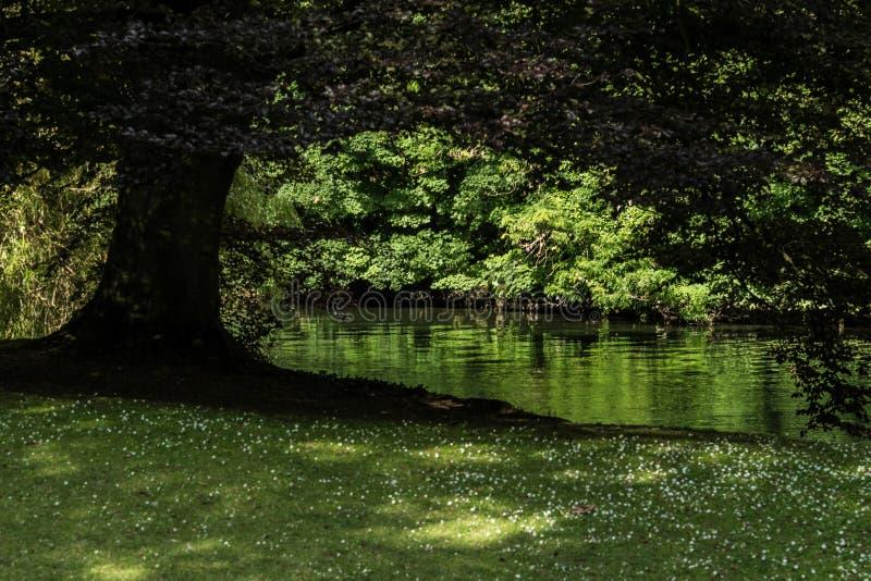 Siluetta britannica dell'albero fotografia stock