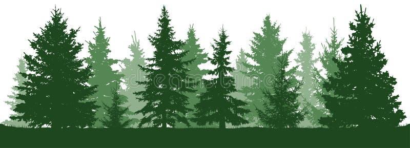 Siluetta degli abeti della foresta Abete rosso verde conifero illustrazione di stock