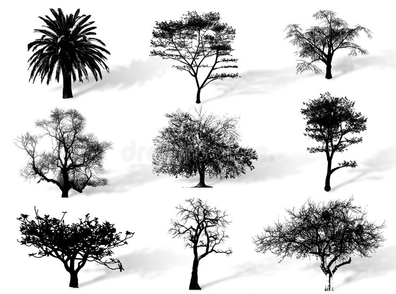 Siluetta degli alberi illustrazione di stock