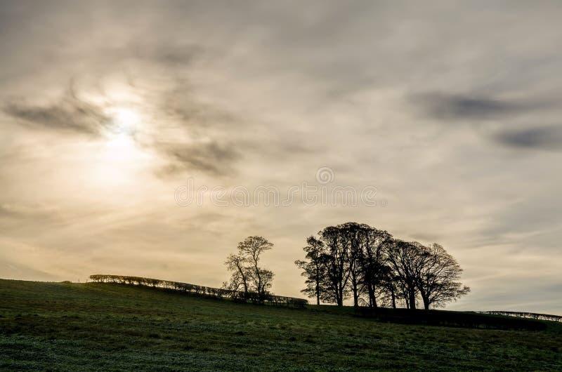 Siluetta degli alberi al tramonto immagine stock libera da diritti