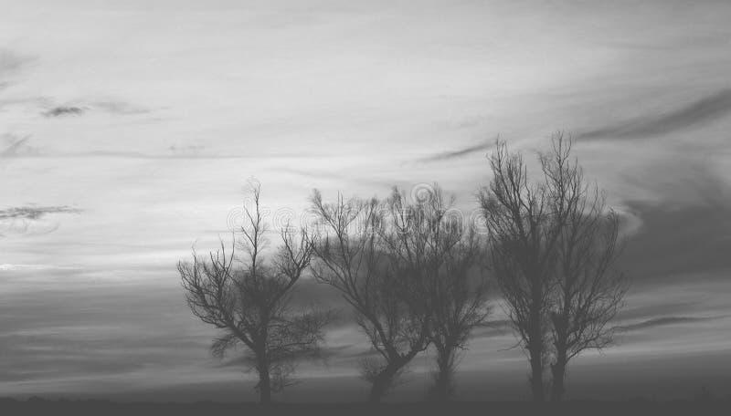Siluetta degli alberi - in bianco e nero immagini stock libere da diritti