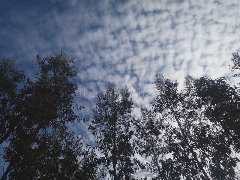 Siluetta degli alberi con un cielo blu spettacolare fotografie stock