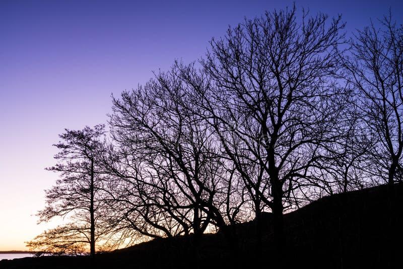 Siluetta degli alberi durante il crepuscolo immagini stock