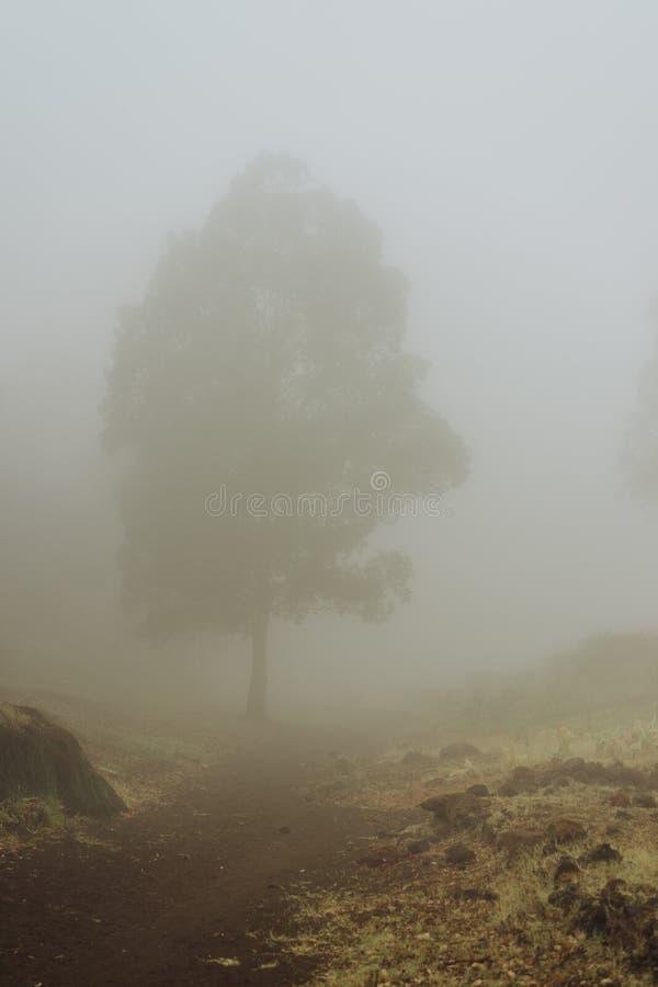 Siluetta degli alberi in nebbia lattea sul fondo del creatore di Vulcan della baia Santo Antao Capo Verde immagine stock libera da diritti