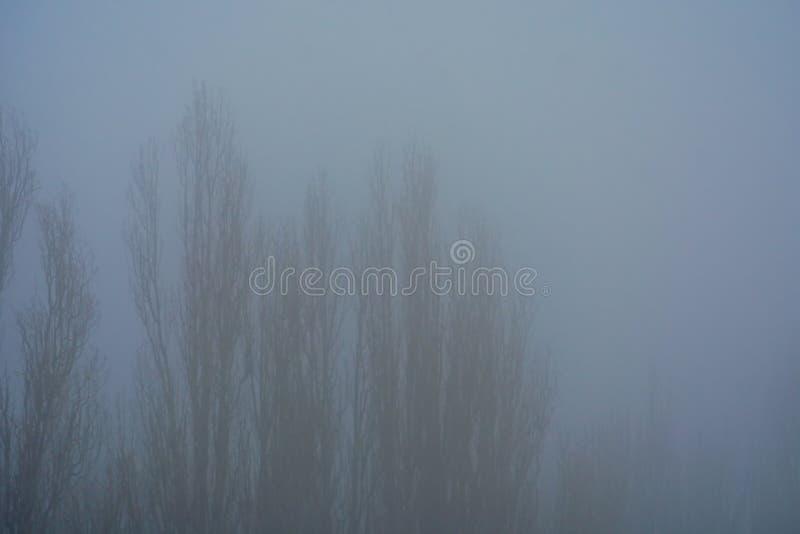 Siluetta degli alberi senza fogliame, diretto a mala pena visibile la nebbia di autunno fotografia stock