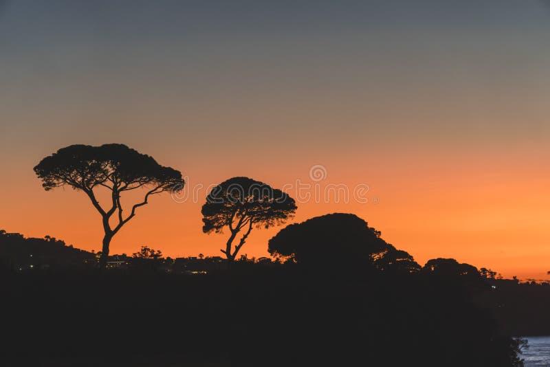 Siluetta degli alberi sul tramonto arancio in montagna Sorrento Italia fotografie stock libere da diritti