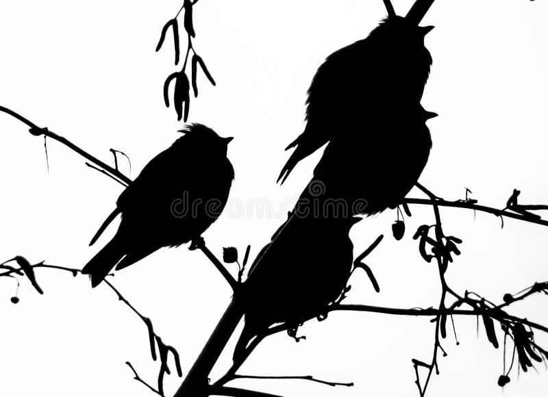 Siluetta degli uccelli immagine stock libera da diritti