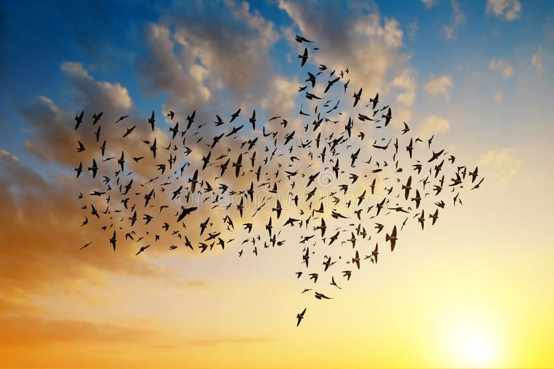 Siluetta degli uccelli che volano nella formazione della freccia fotografie stock