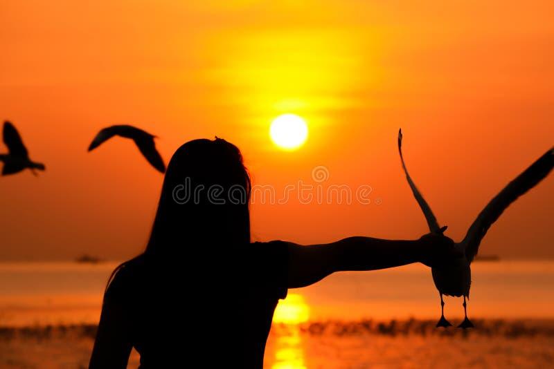 Siluetta degli uccelli d'alimentazione di una ragazza al litorale nella penombra immagine stock libera da diritti