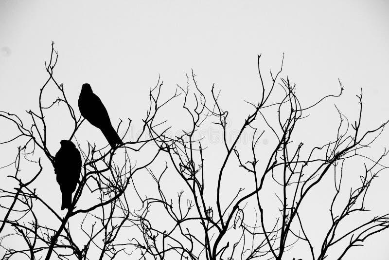 Siluetta degli uccelli sull'albero fotografie stock