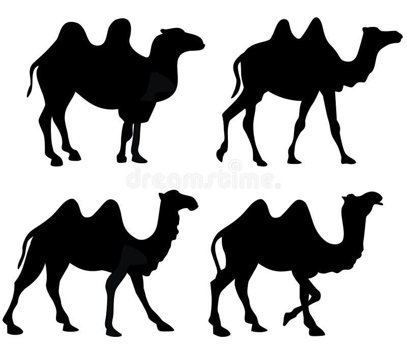 Siluetta dei cammelli del cammello isolata illustrazione di stock