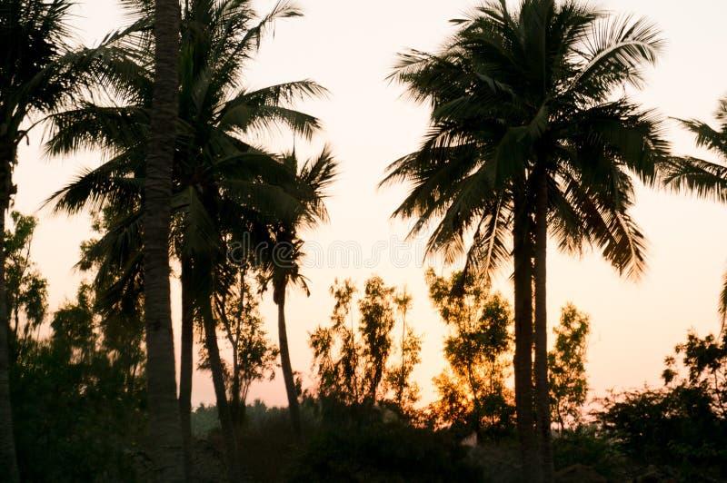 Siluetta dei cocchi della palma sparati contro il tramonto nel Goudjerate India immagini stock