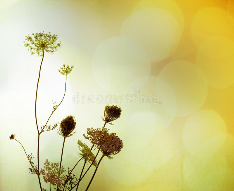 Siluetta dei fiori selvaggi immagini stock