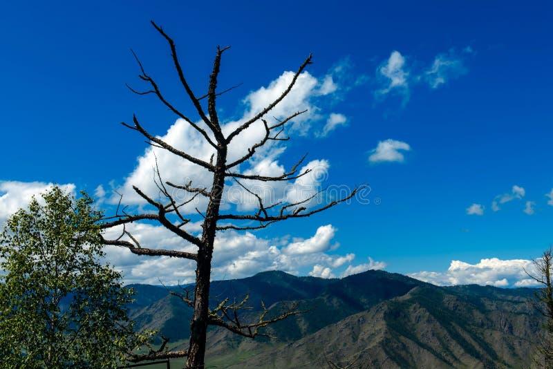 Siluetta dei rami di albero senza foglie contro il cielo blu e le montagne Albero sfrondato solo nei precedenti delle montagne fotografia stock