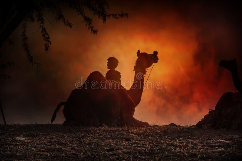 Siluetta del cammello in Pushkar immagini stock