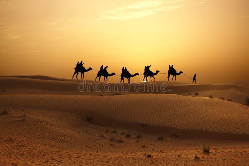 Siluetta del caravan del cammello con la gente sul deserto al tramonto fotografia stock libera da diritti